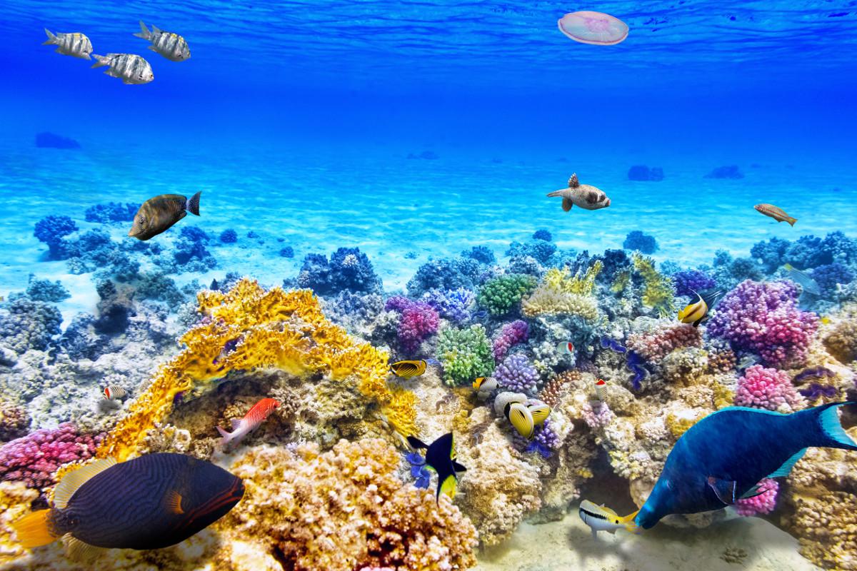 Eine wunderschöne Aufnahme eines Korallenriffs mit farbenreichen Fischen.